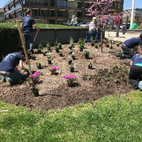 Volunteers planting flowers