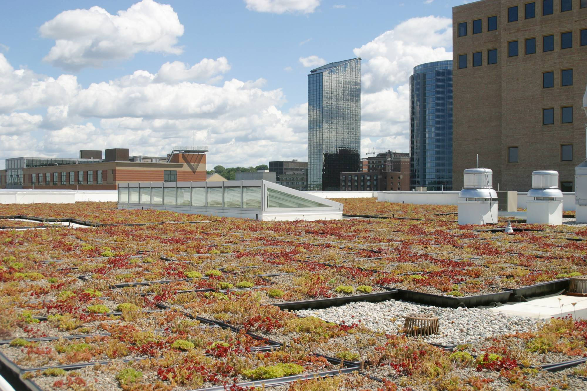 downtown campus roof garden