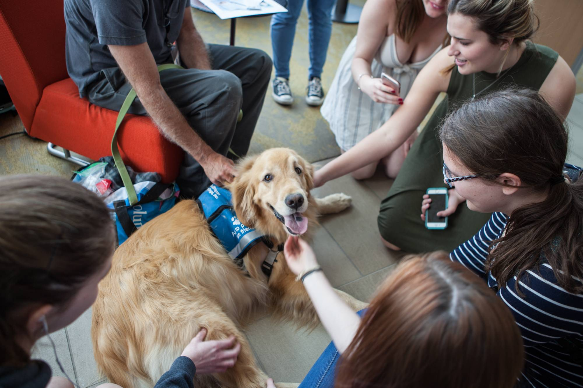 group of students petting a golden retriever therapy dog