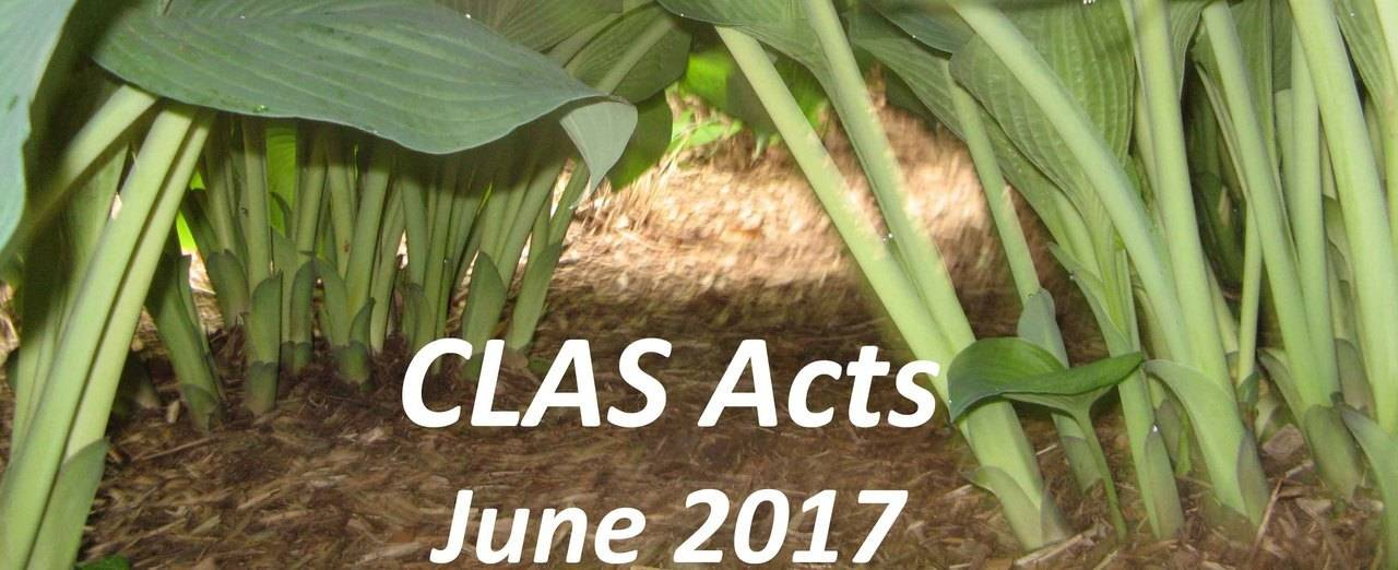 CLAS Acts June 2017 displaying image of hosta plants