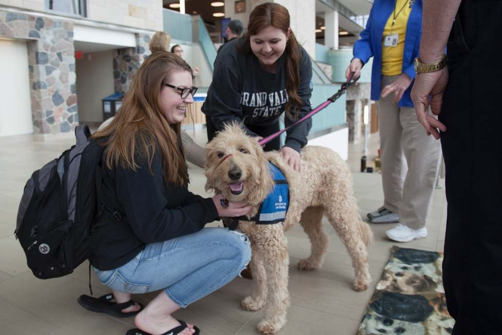 Michigan Therapy Dogs Services