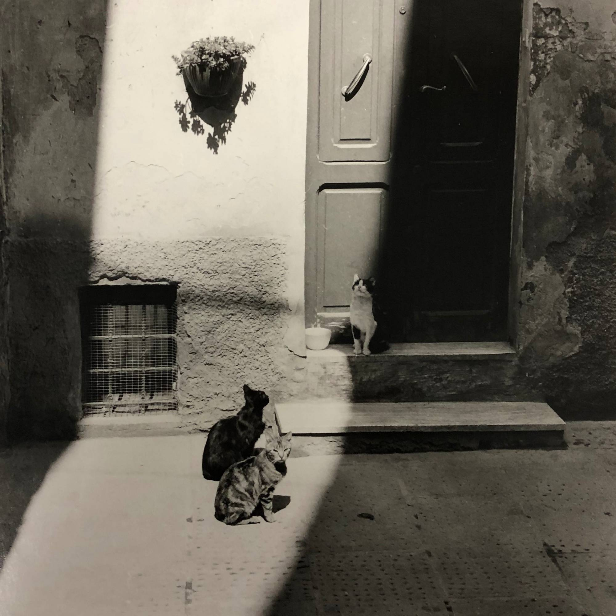 black and white photograph of three cats sitting in front of doorway in cobblestone alley