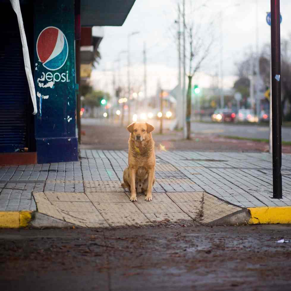 dog sitting on street corner in front of pepsi machine