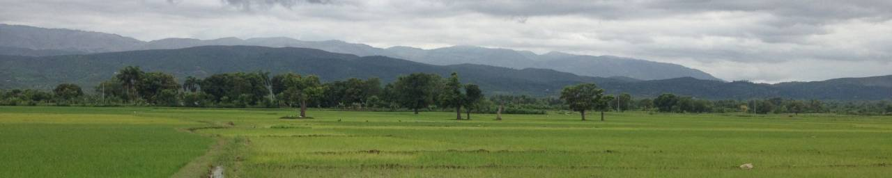 Rice Fields in the Artibonite River Valley