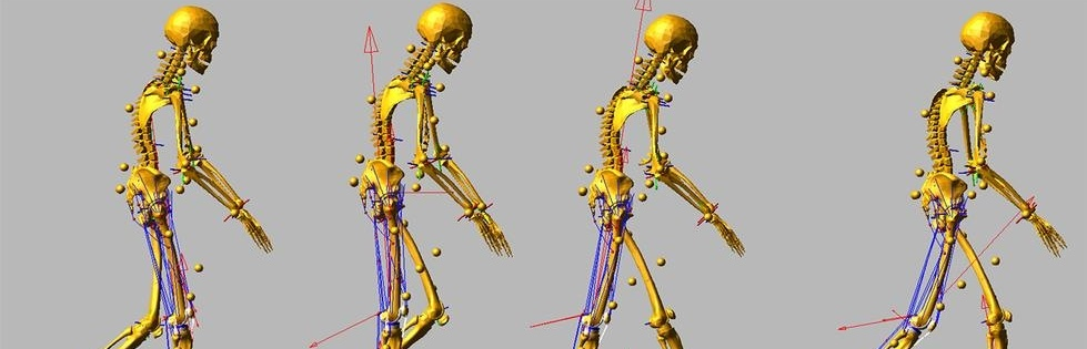 Biomechanics of walking