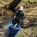 Remote site egg incubators tested for reintroducing Arctic Grayling to Michigan