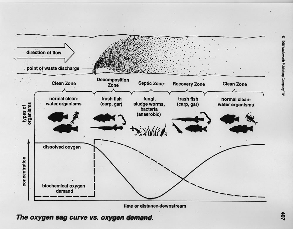 biological oxygen demand and dissolved relationship