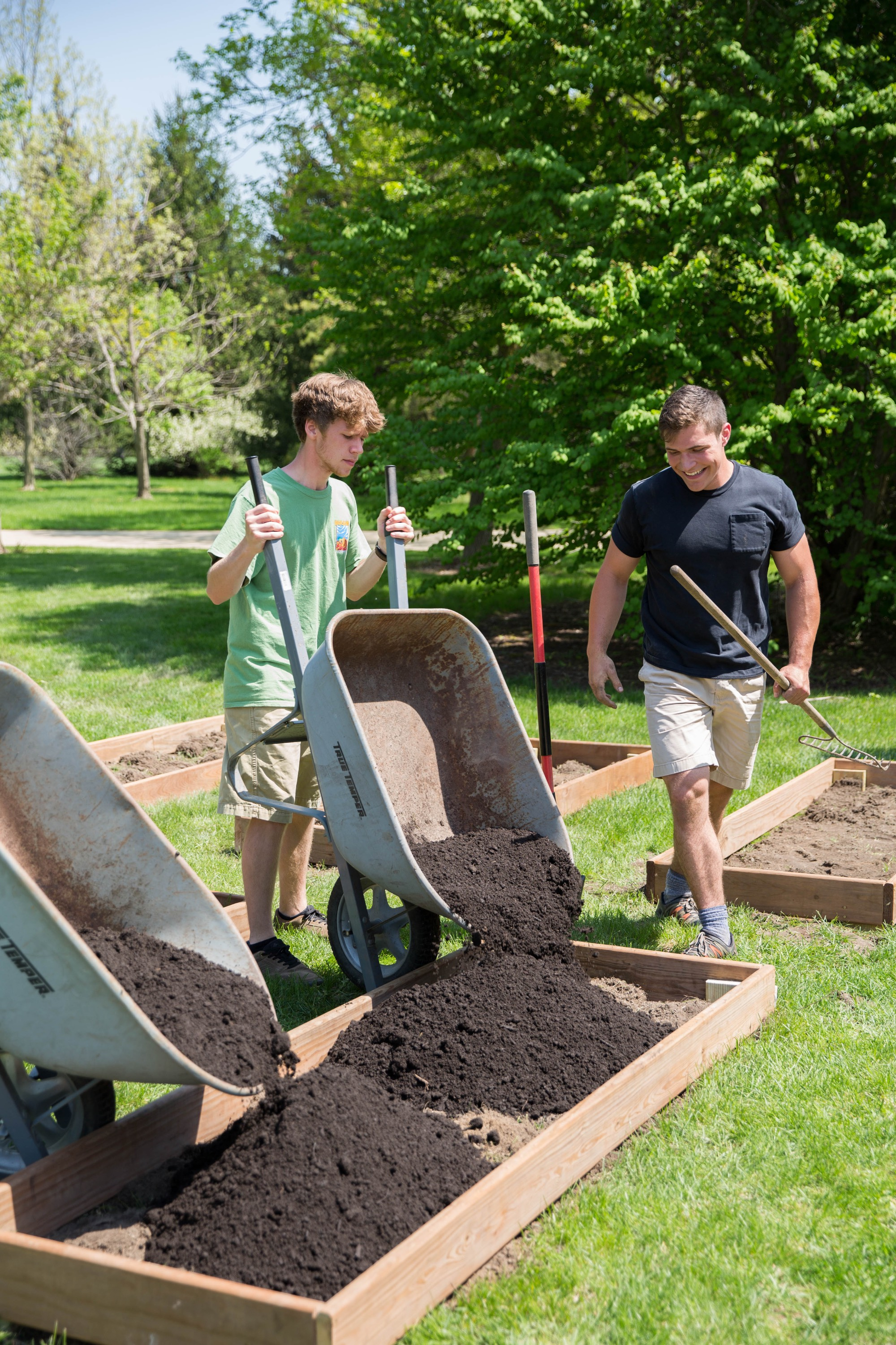 students fill garden boxes with soil