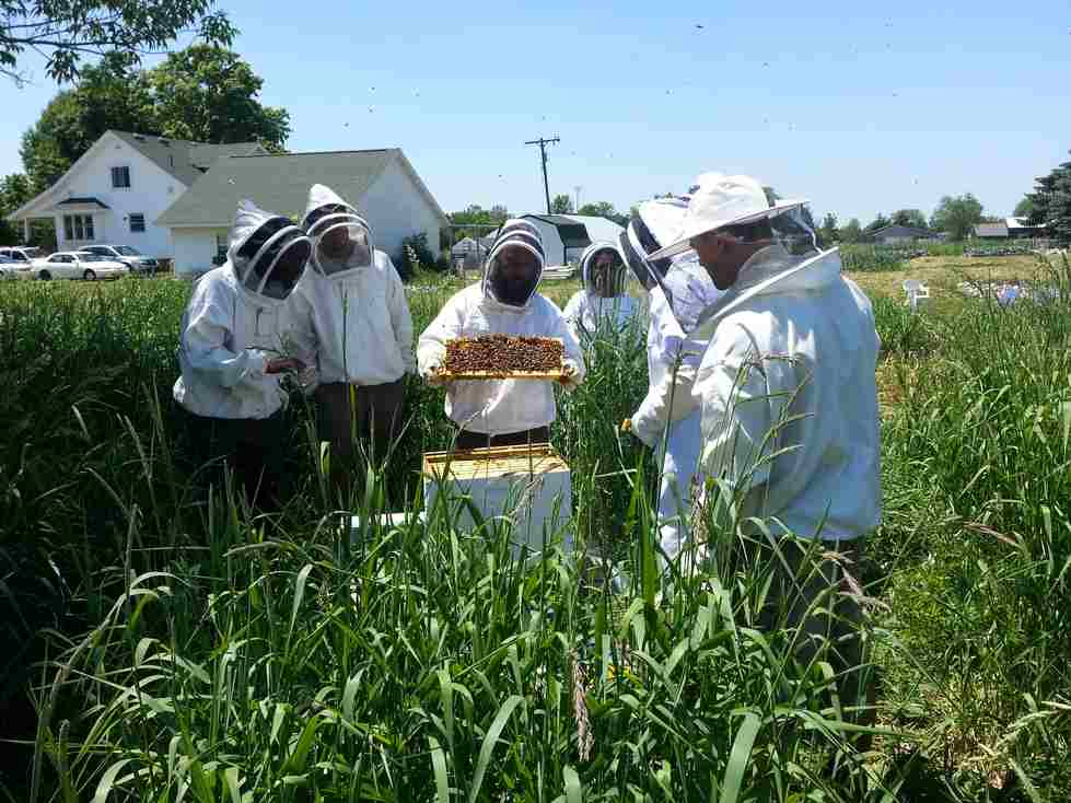 Honeybee Management