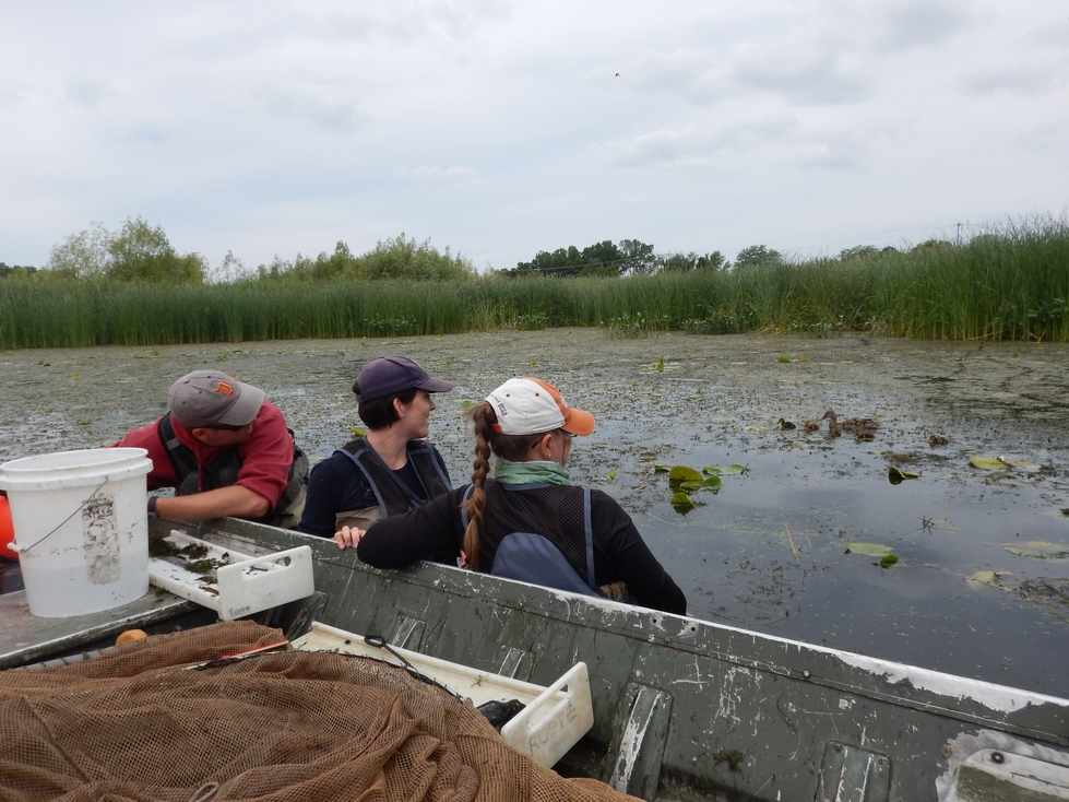 Coastal Wetland Monitoring Project