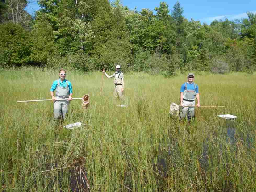 Alan, Evan, and Kaitlyn collect macroinvertebrates from a coastal wetland