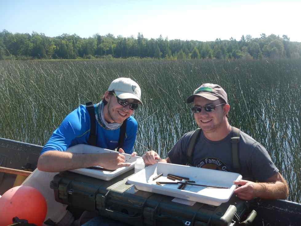Alan and Evan collect macroinvertebrates from a coastal wetland