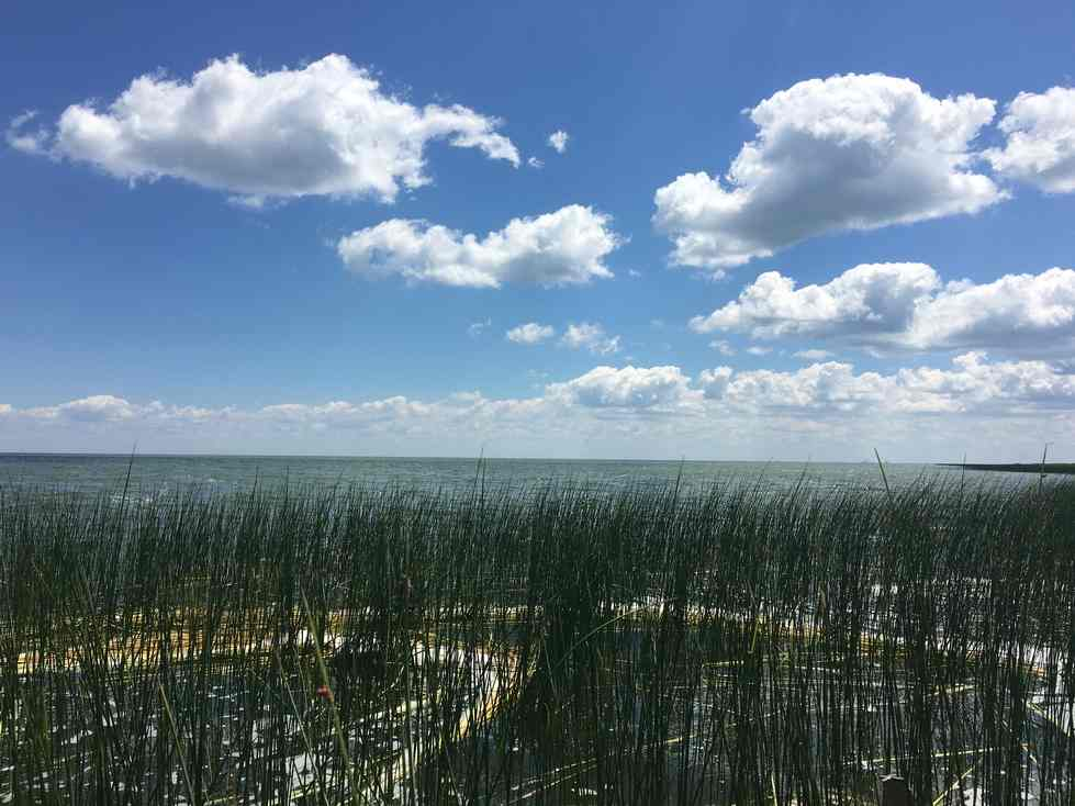 Coastal wetland in Saginaw Bay