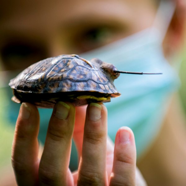 A student researcher holds up a baby turtle.