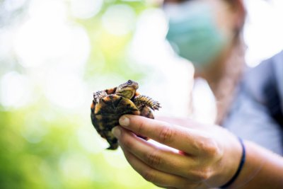 A person holds a baby turtle.