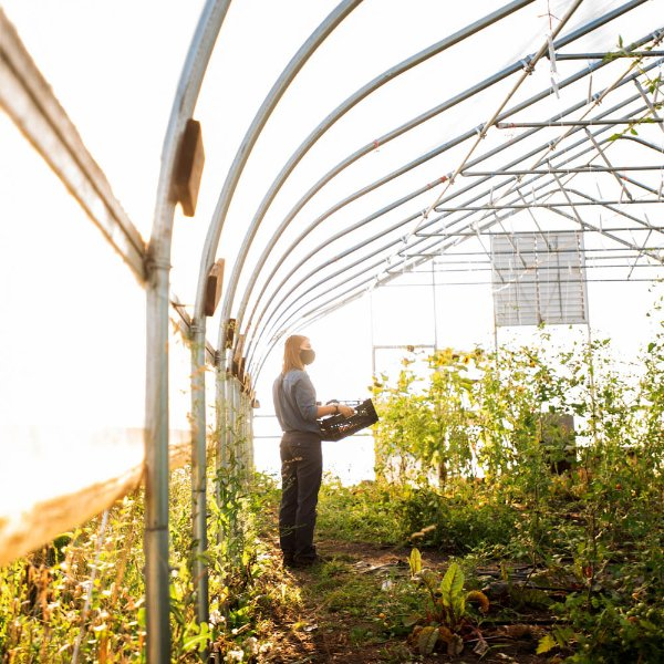 A person stands inside of a greenhouse holding a basket of plants.