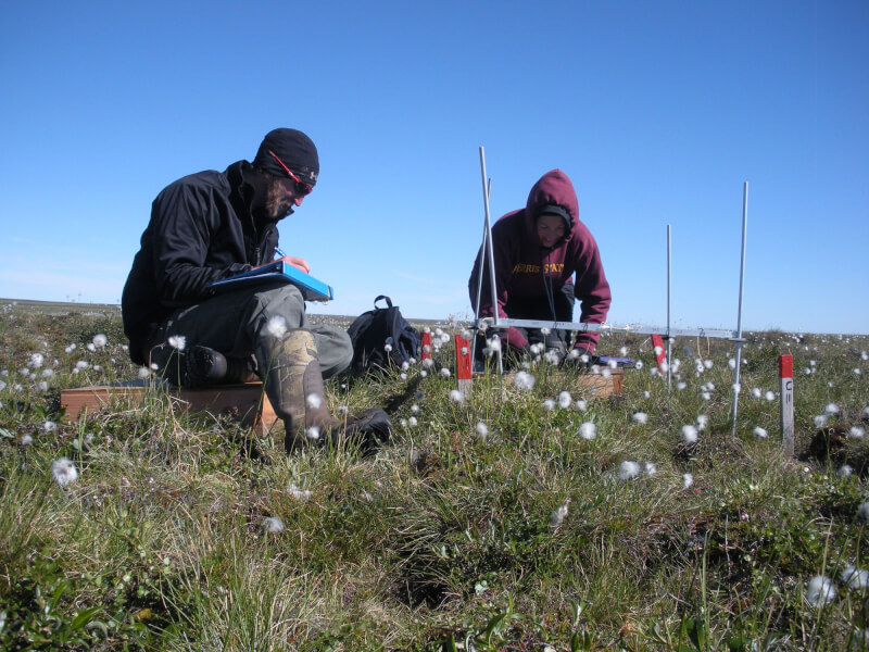 Alumni AJ Smith and Jessica Gregory sampling vegetation in Atqasuk, Alaska.